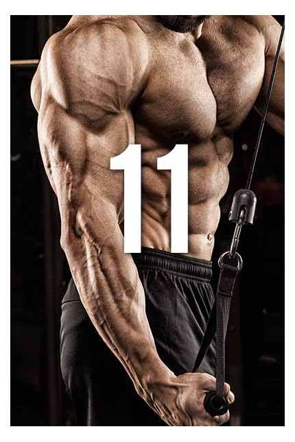 11 Prinzipien des Bodybuilding Trainings